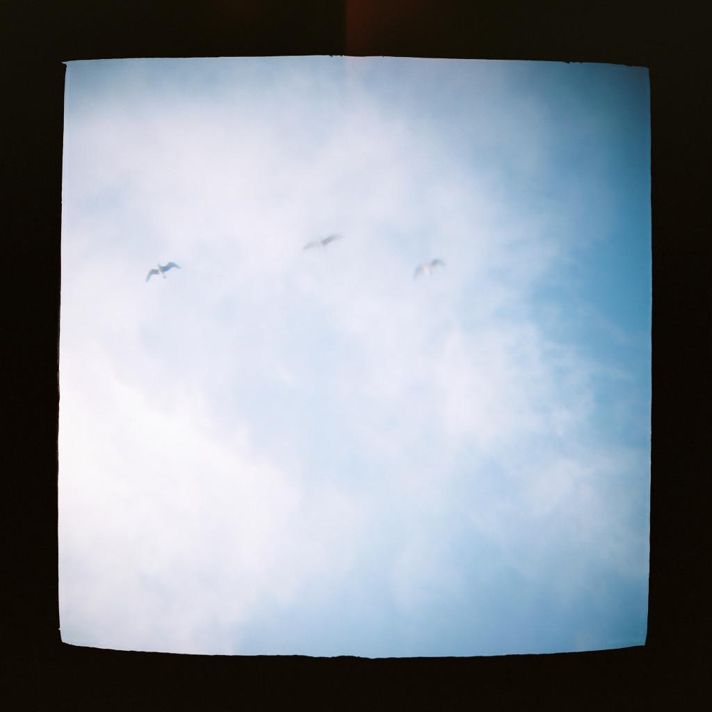 blue skies with birds Holga travel photos