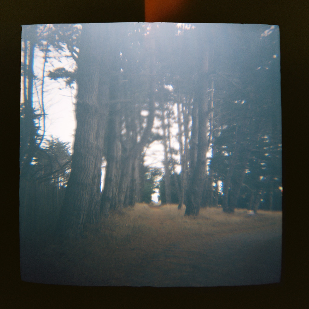 seaside forest Holga travel photos