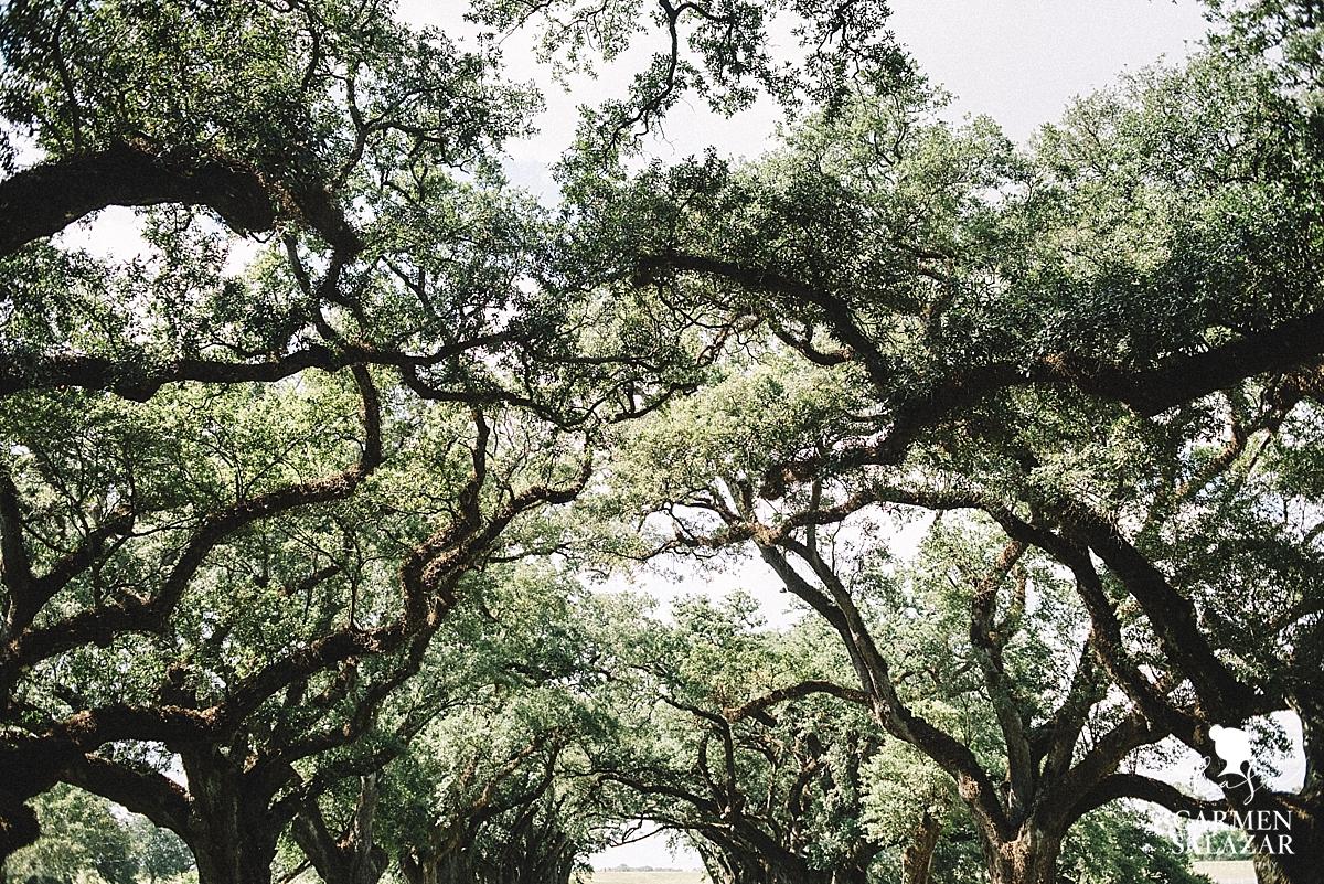 Photo of Louisiana Plantation property by Carmen Salazar