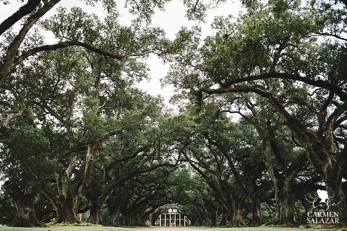 Cobble stone driveway at Louisiana plantation by Carmen Salazar
